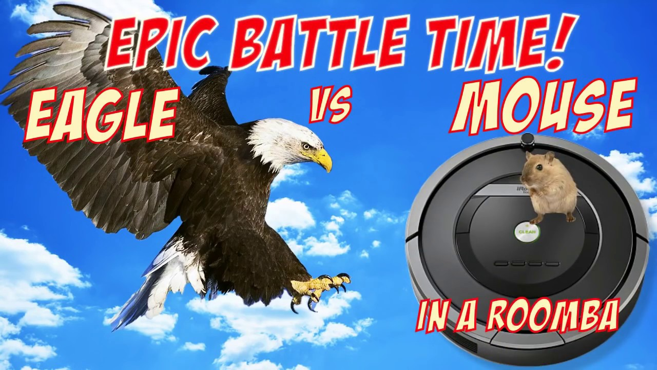 The Best of Eagle Attacks vs Roomba | Most Amazing Wild Animal Fights |