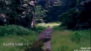 مقطع لمخلوق غريب يسكن الغابات والجبال ....جن حقيقي للكبار فقط