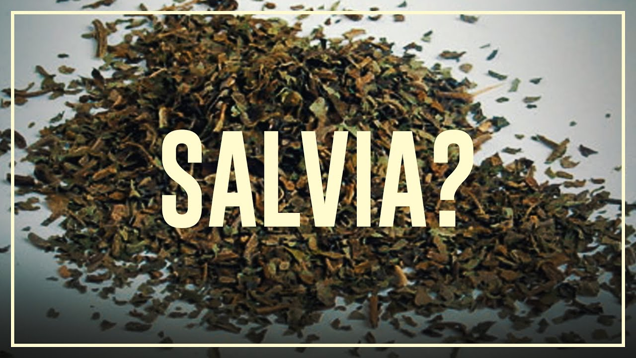 salvia and sex