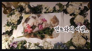 고양이 민트와의 이별 / 추모, 장례식 영상