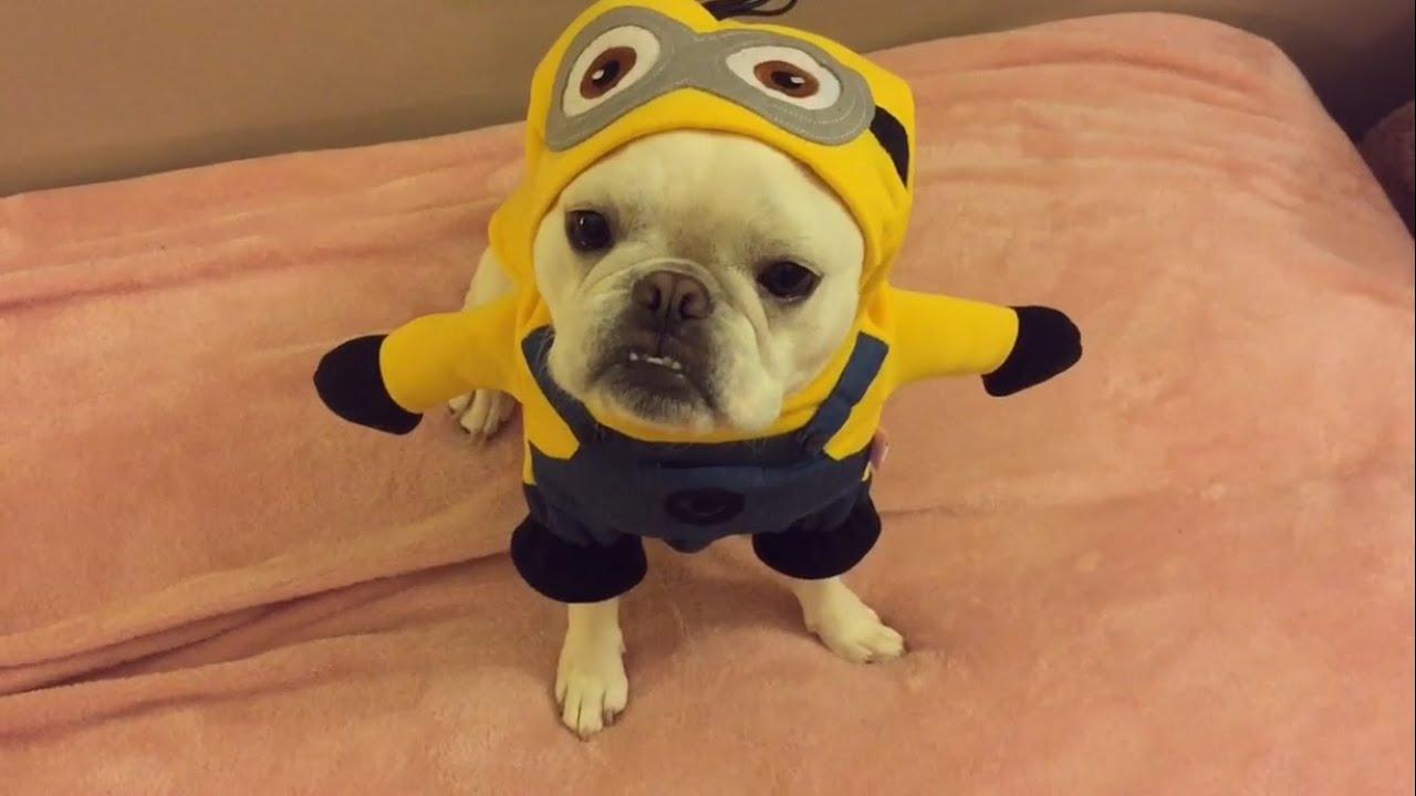 Minions Dog wants a Banana & Minions Dog wants a Banana - YouTube