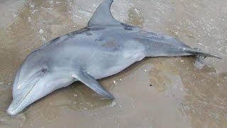 Dolphin Rescue (Cunit beach, Tarragona)