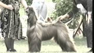 1999 Ahca National Specialty (4/5) - Best Of Breed