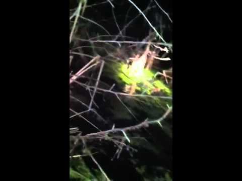 Gator Hunting with Cylk Cozart