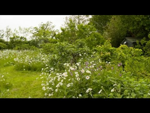 Big Dreams, Small Spaces: Maddy & Tim Harland\'s Forest Garden - YouTube