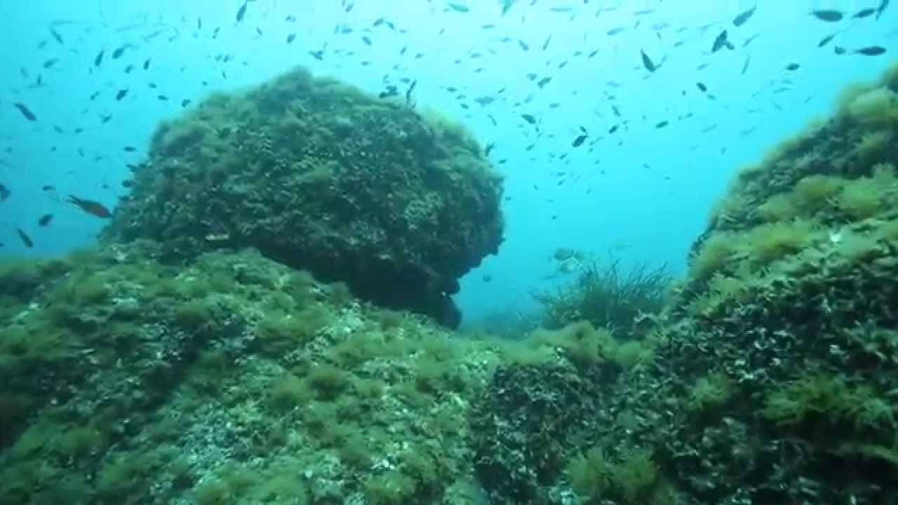 Les fonds marins de cannes ce que l 39 on vous cache for Les fonds des photos