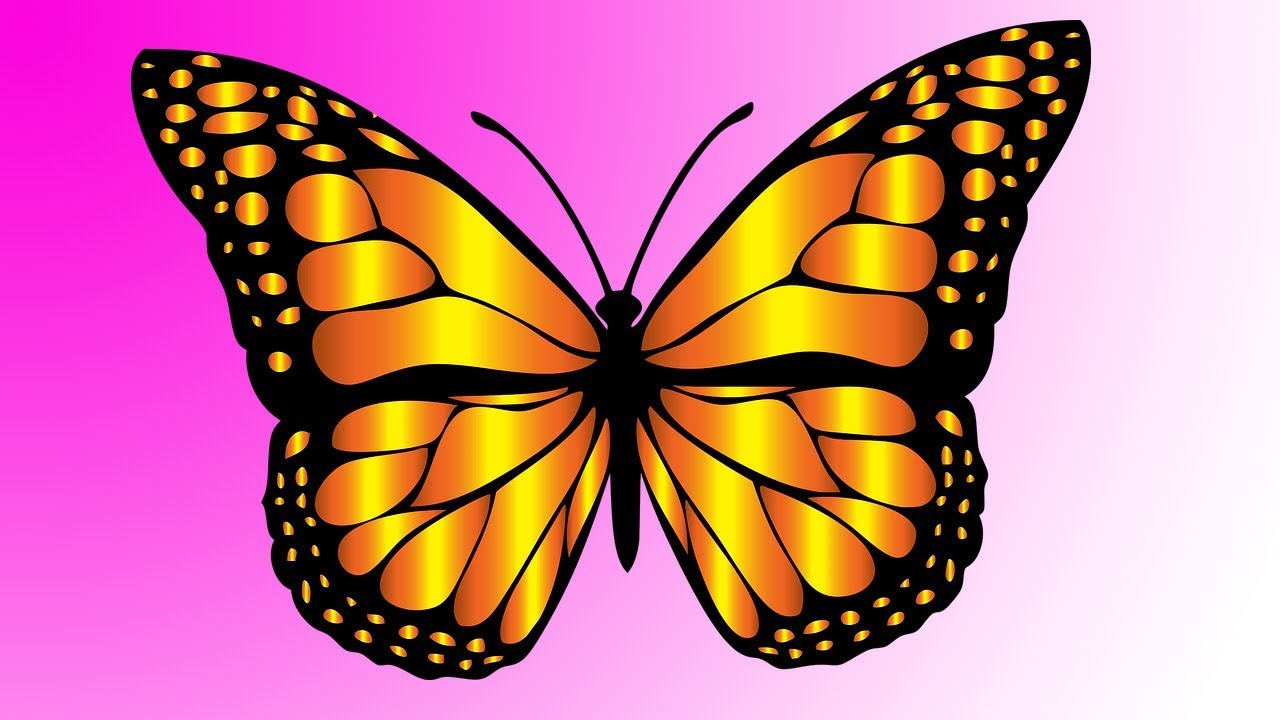 How to Draw -- Butterfly Easy- Step by Step - YouTube