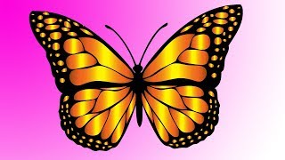 butterfly draw easy step