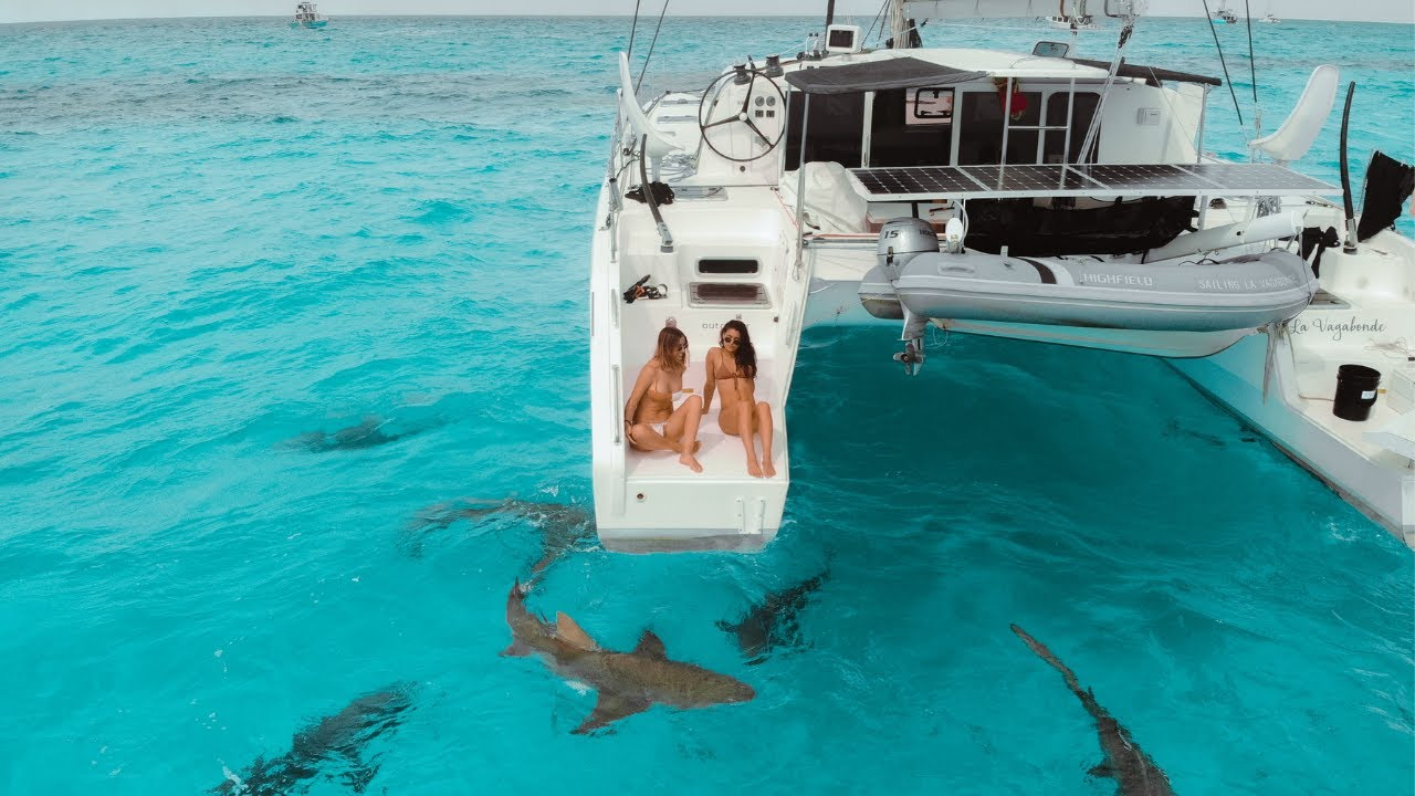 Download TIGER SHARKS surround our boat. WE SWIM WITH THEM! 🦈 Ep.197