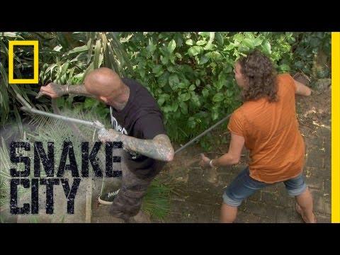 Monster-sized Mamba | Snake City