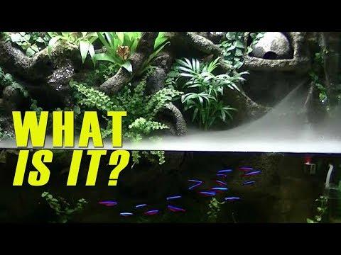 Alternative Aquariums: Paludarium