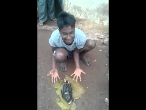 Hubli comedy, funny video,  Murgi ki mayyat.