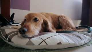 כלב אפס