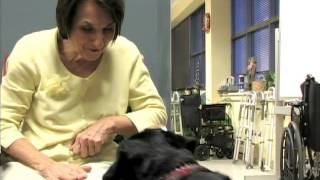Therapy Dogs 2012 Combined