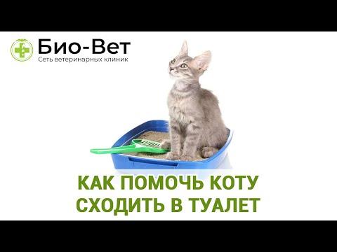 Как помочь коту сходить в туалет. Ветеринарная клиника Био-Вет.