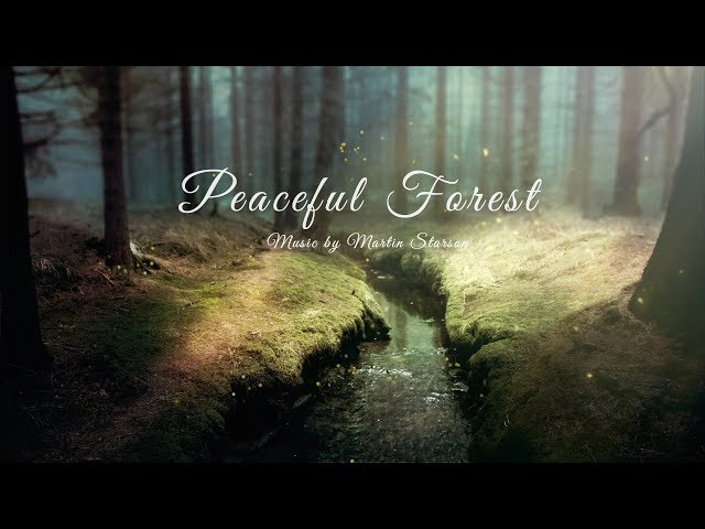 Piano & Nature Sounds 1 Hour 'Peaceful Forest' Relaxing Blackbirds and Piano