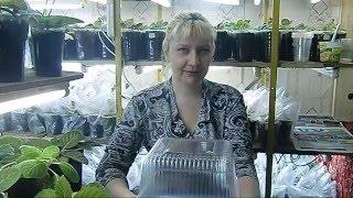 🌼Укоренение листьев глоксиний в тепличке. Экономим место !🌼🌱How to grow gloxinia part №32