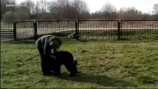 Обучение щенка команде «лежать» | Урок 9 видеокурса «Растем вместе»