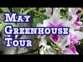 May Greenhouse Tour: Buds, Blooms Some Thanks and the Cloning Paste Update