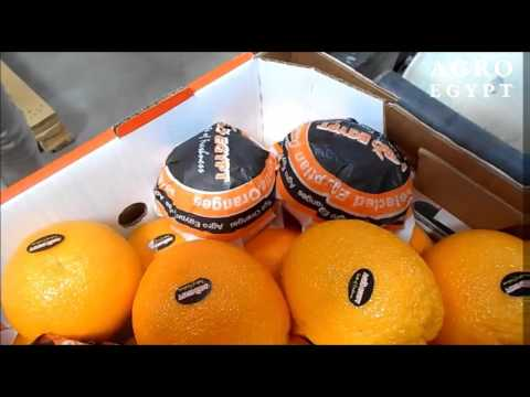 Valencia Oranges - AgroEgypt - April 2016