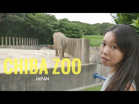 This is Chiba Zoo in Japan! [Beware Nasty Monkeys]