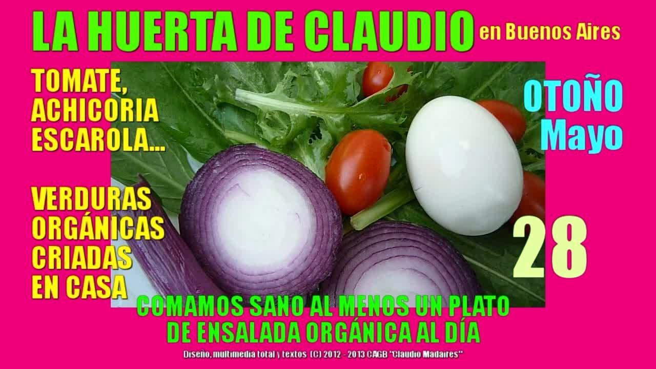 Cultivo de verduras y frutas org nicas en casa youtube for Cultivo de verduras en casa