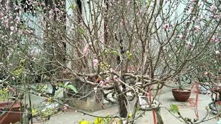 Mùa xuân xôn xao - Nguyễn viết Thiện