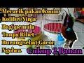 Meracik Pakan Konin Kolibri Ninja Tanpa Ribet Bikin Gacor Ngobra  Mp3 - Mp4 Download