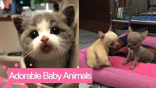 Cute Baby Animals Video Compilation | Adorable Animal Moments 2019