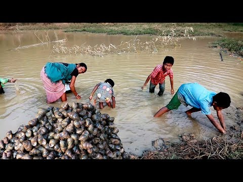 Unique & Primitive Guguli Trapping System | Collecting Oyster by Tribe people in the village