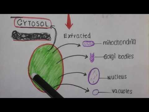 Cytoplasm vs Cytosol.