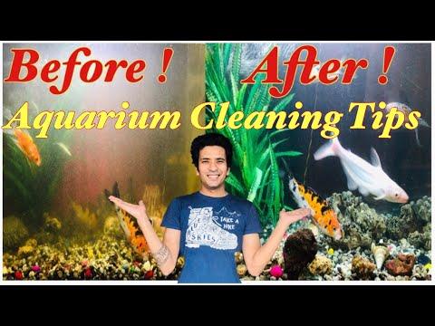 Koi Carp Fish Tank Cleaning   Koi Carp Aquarium   Tank Cleaning Tips   Indian Aquarium