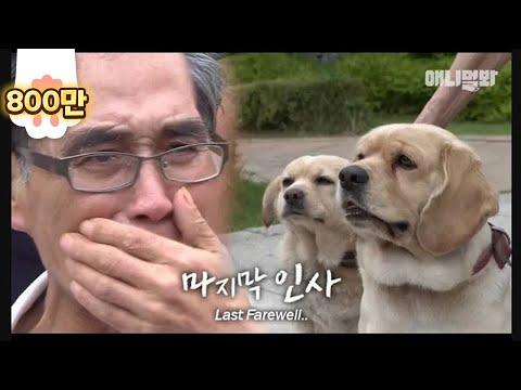 """Dog Carries A Stone-Like Thingy On His Body""Kaynak: YouTube · Süre: 3 dakika32 saniye"