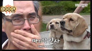 """""""사랑했다.."""" ㅣ Last Farewell Between Cancer Patient And His Dogs"""