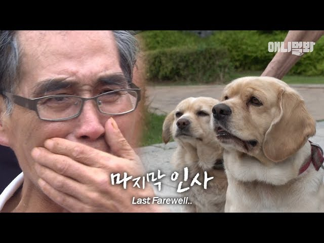 """사랑했다.."" ㅣ Last Farewell Between Cancer Patient And His Dogs"