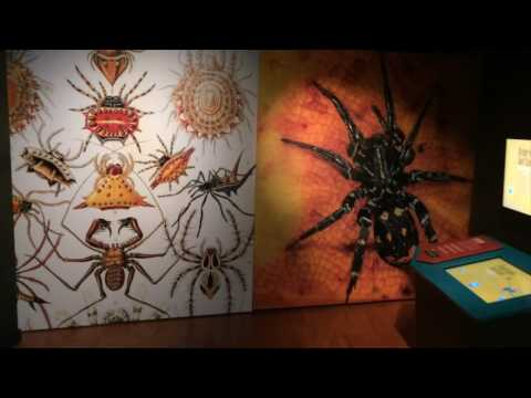 Spider exhibition at Australian Museum