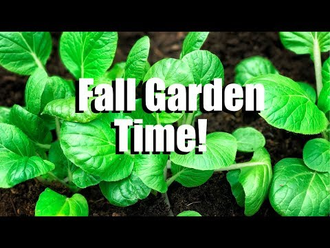 Fall Gardening #1: Cool Weather Vegetables – What are They, How to Plant Them and What I am Growing
