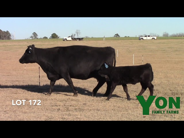 Yon Family Farms Lot 172