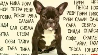 Как мне назвать свою собаку ???//Даша Кэт\\помогите с именем