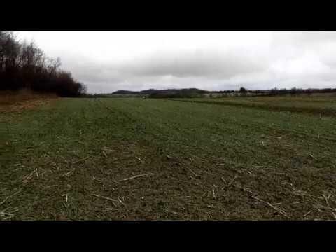 Winter rye update, No-Till Drilled vs Broadcast