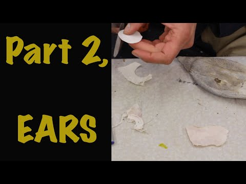How to fit earliners, how to repair ears, Red Stag, Art of Taxidermy.