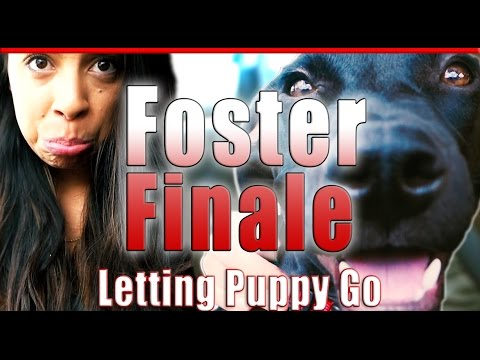 Foster Dog Finale | Saying Goodbye for Good