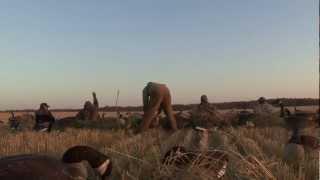 Canada archery goose hunt