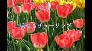 花の美しさをご覧ください。