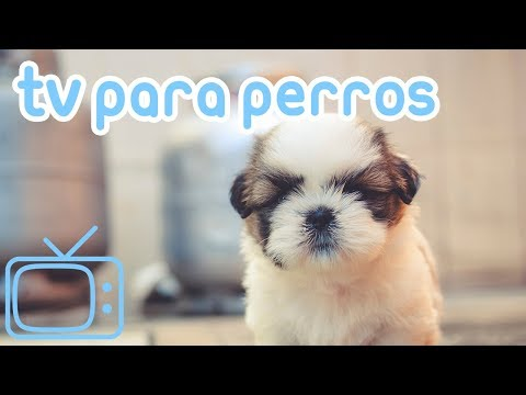 TV de perro! Videos para entretener a los perros con música relajante!