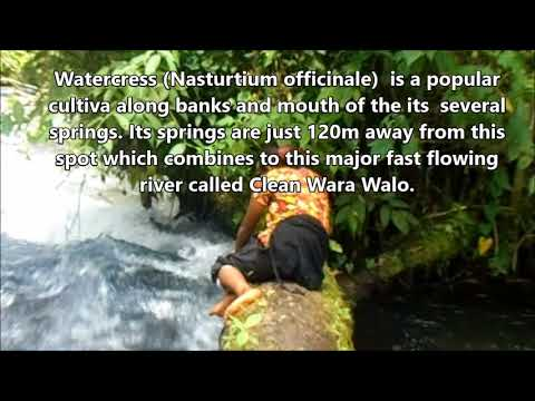 Amazing Cleanwara Walo (Baiyer RIver, Western Highlands Province. Papua New Guinea)