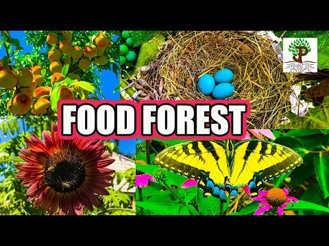 BOTANICAL PERMACULTURE FOOD FOREST