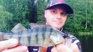 Рыбалка в Карелии.🎣 ЛОВЛЯ ОКУНЯ на джиг летом 2019.🎣 ЛОВЛЯ ОКУНЯ на СИЛИКОНОВЫЕ ПРИМАНКИ.🎣