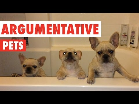 Argumentative Pets Video Compilation 2016