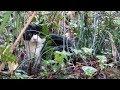猫なんているはずのない公園に突然出現したハチワレ野良猫🙀🐾🍃